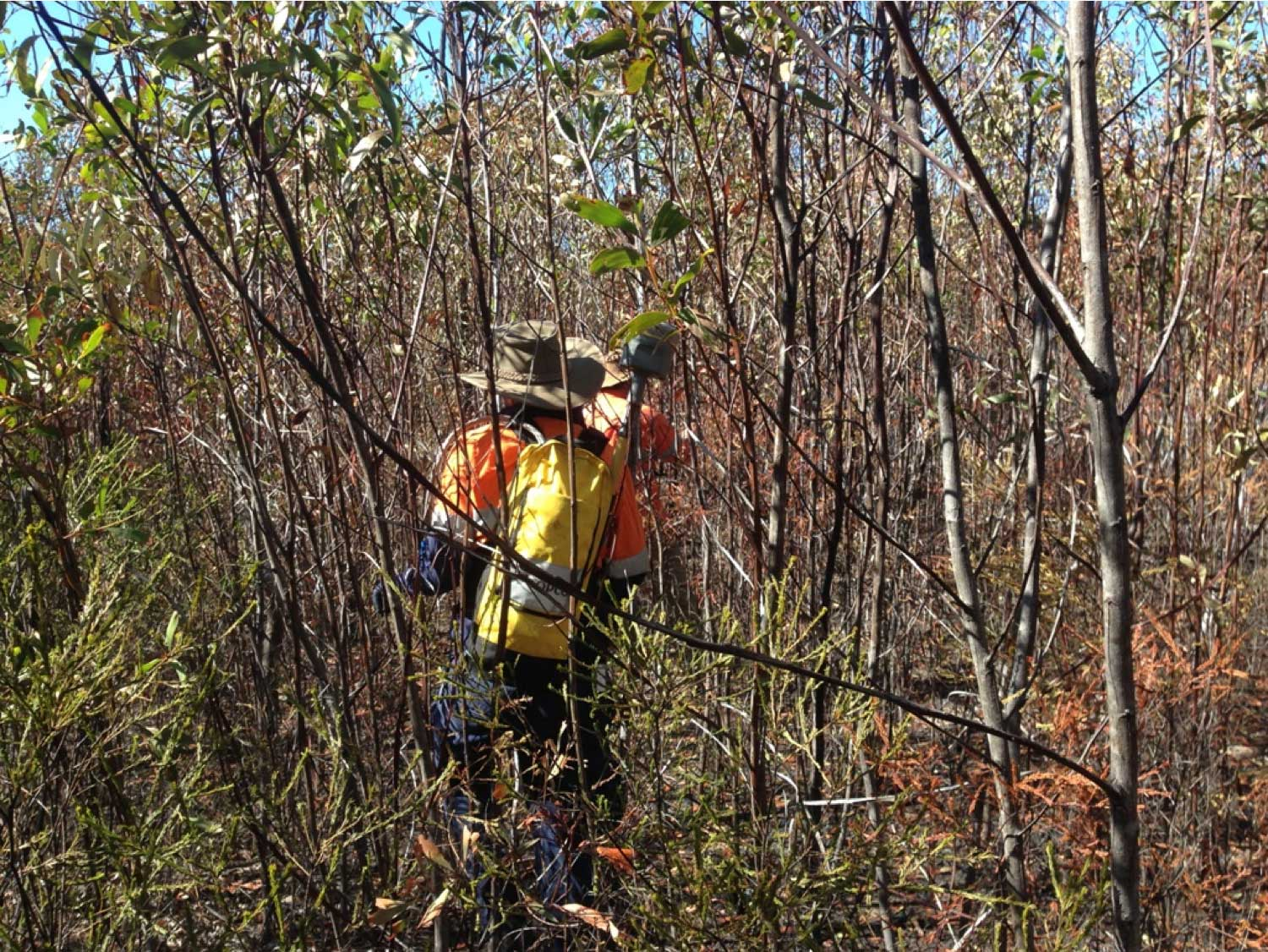 R10_Surveying in a thicket.jpg